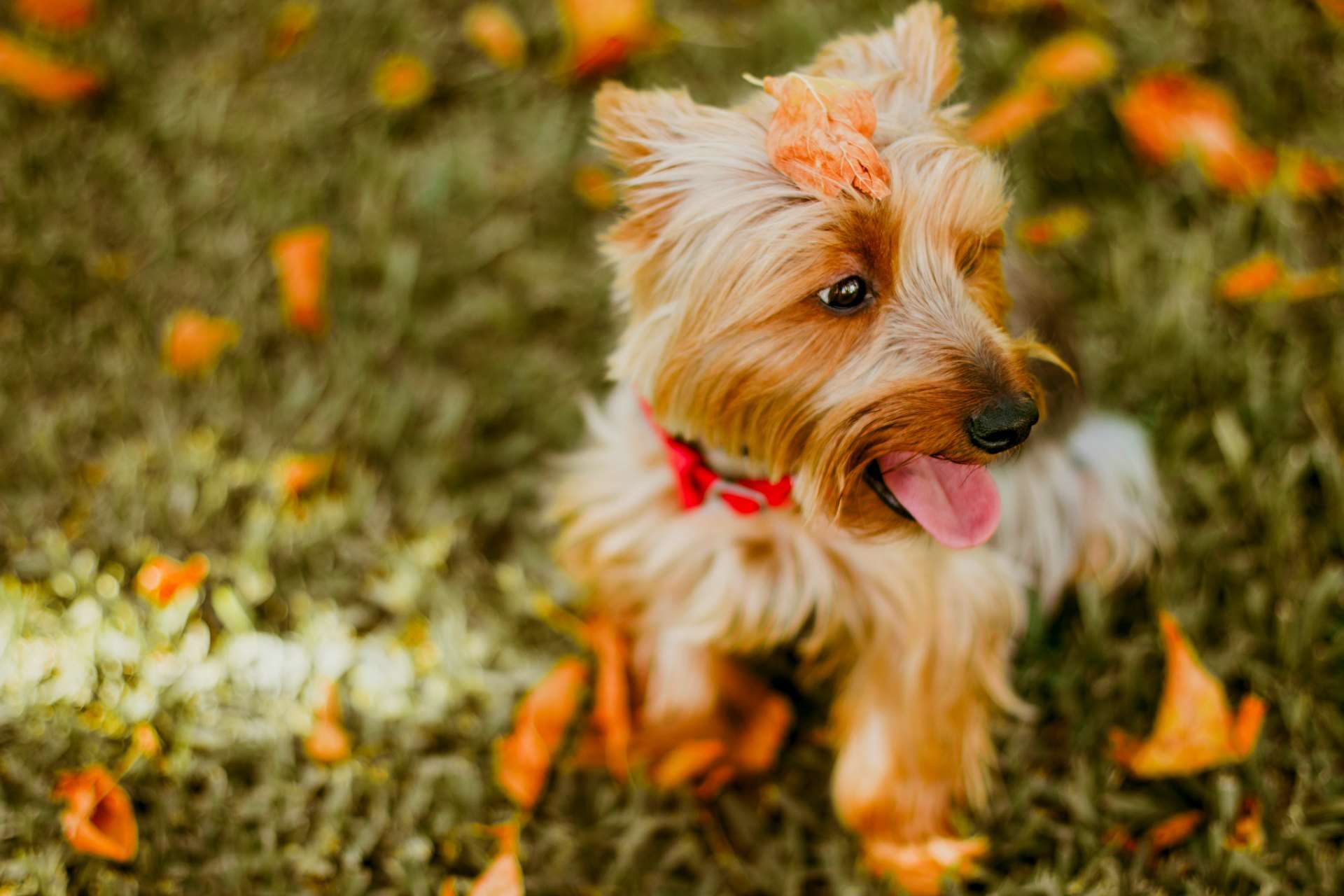 Free Pet Groomer Scheduling Software - What is invoice number on receipt online pet store