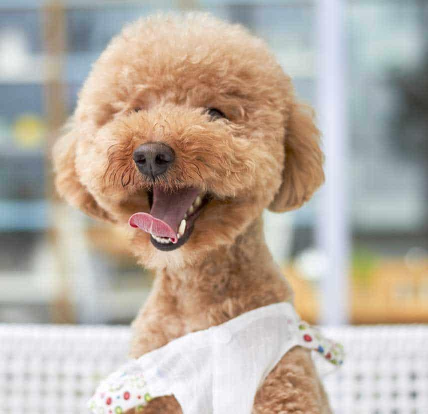9 Brilliant Ways To Market Your Pet Grooming Shop